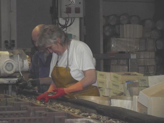 La Ferme Marine: Sorting the oysters