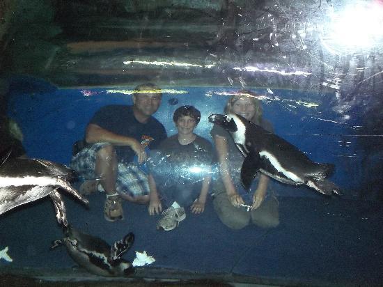 Cool Activitys Picture Of Georgia Aquarium Atlanta