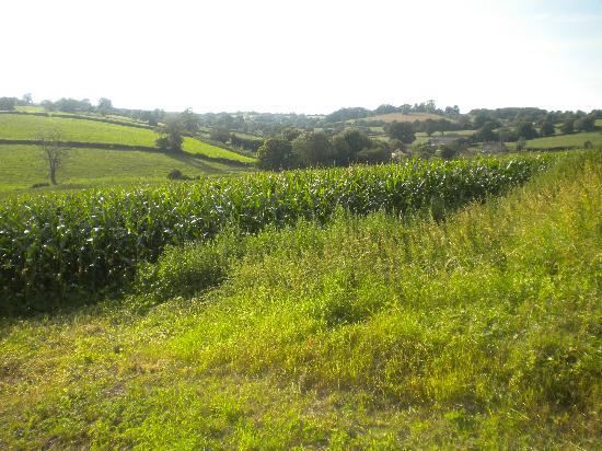 Withy Mills Farm: Vistas desde las cabañas de Withy Mills