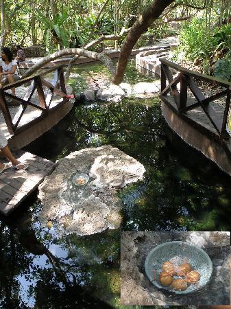 Sungkai, Malasia: Egg Boiling spot