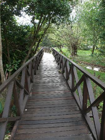Sungkai, Malasia: Broadwalk leading to natural sauna