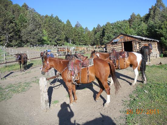 Bonanza Creek Guest Ranch: Beautiful horses