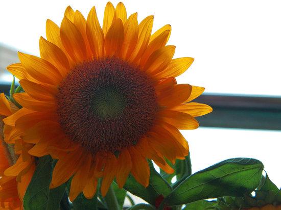 Sunflower's Home Hostel: Sunflower