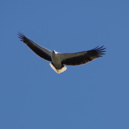 Caloundra Cruises: Sea Eagle on Caloundra Cruise