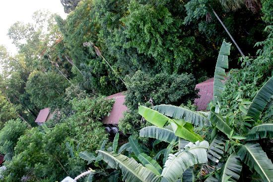 Hotel Jungle Lodge: property of hotel from top