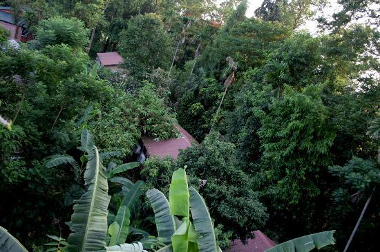 Hotel Jungle Lodge: property of the hotel