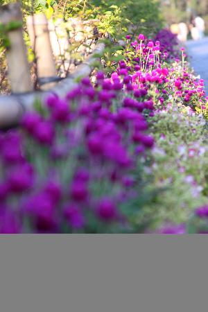 Conifer Hotel: Flowers