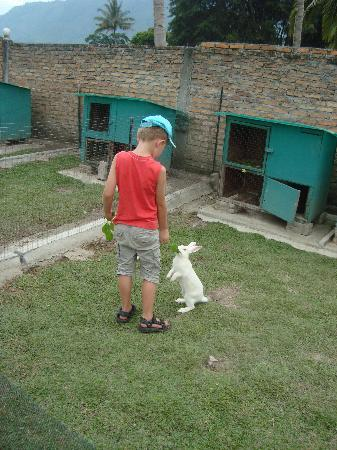 Horas Family Home: Playing with the rabbits