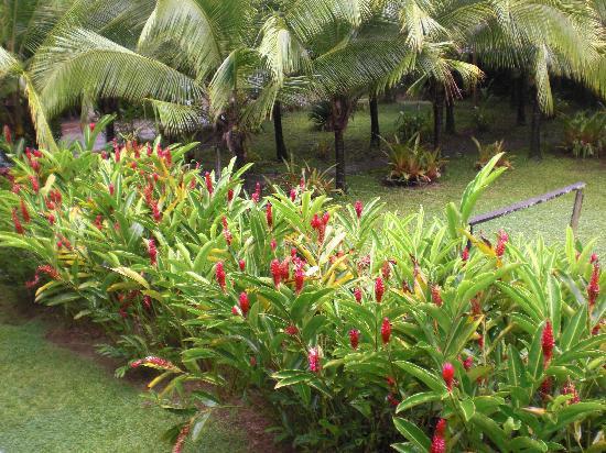 Hotel Rustico de Playa Perla Negra: Garten im Perla Negra