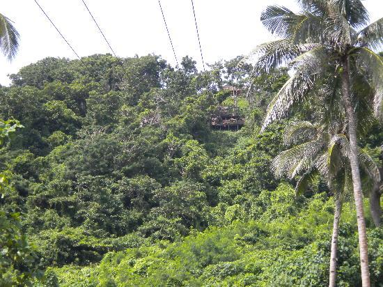 Zipline Boracay: View of zipline from below (finish line)