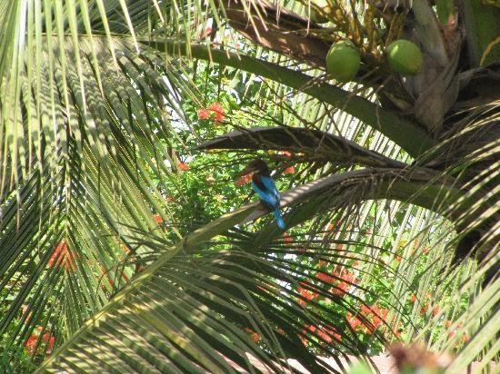 Estrela Do Mar Beach Resort: In the garden