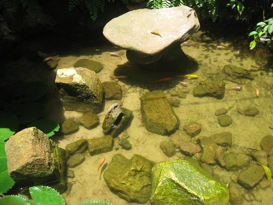 Le Cap Breton: fish pond next to dining table