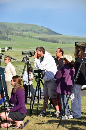 Yellowstone Association - Private Tours: Sean finding the wolves on the spotting scope for us.