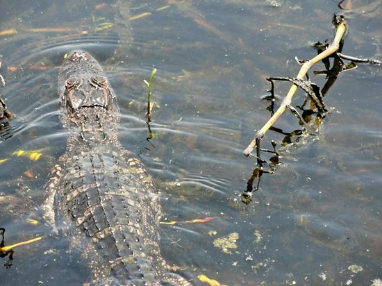 Big Toho Airboat Tours