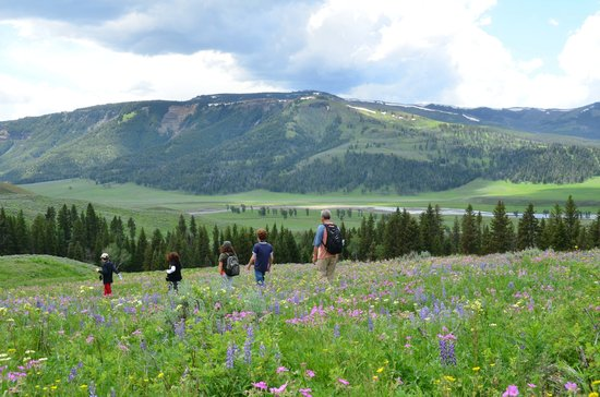 Yellowstone Association - Private Tours: Hiking from the wolf enclosure.