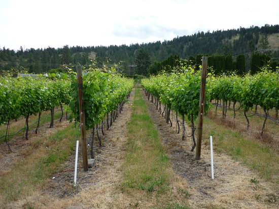 La Frenz Winery: The vineyard