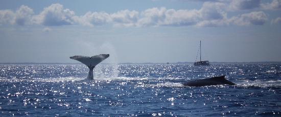 Mata de São João, BA: Baleiada / Whale Watching