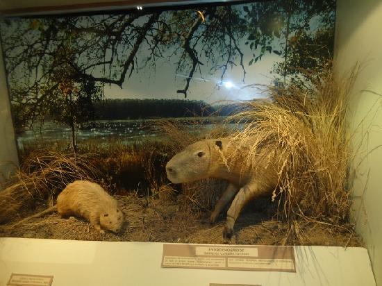 Lorenzo Scaglia Municipal Museum of Natural Sciences: 4-Museo C.Naturales