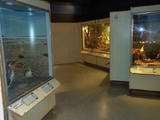 Lorenzo Scaglia Municipal Museum of Natural Sciences: 3-Museo  C.Naturales