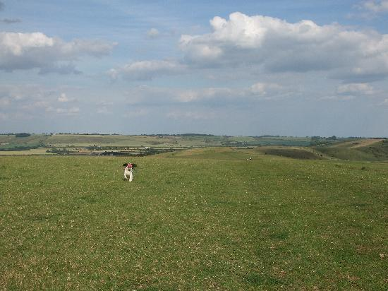 Barbury Castle Country Park: Smeaths Ridge, Barbury Castle