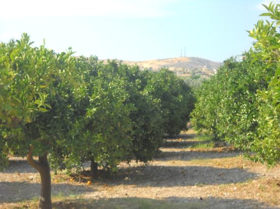 Petrothalassa, Grèce : orange trees into the space of hotel!!!