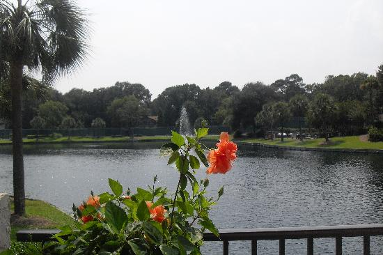Seawatch at the Island Club: Beautiful Grounds