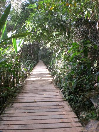 Tambo Jungle Lodge: Beginning of walk to Sodoval Lake