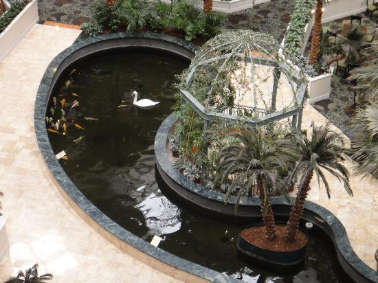 Embassy Suites by Hilton Las Vegas: Resident swans