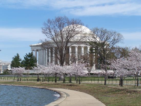 Washington DC, DC: The Jefferson Memorial with Cherry Blossoms