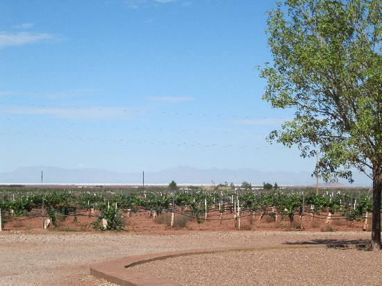 Alamogordo, Nouveau-Mexique : View of pistachio trees on ranch