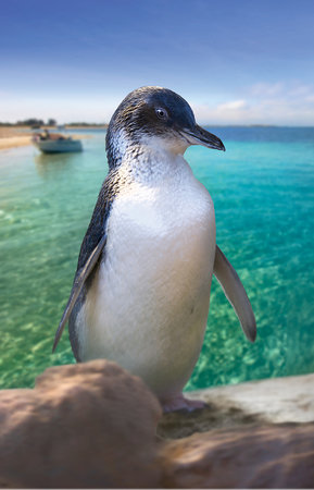 Rockingham, Australien: Penguin Island