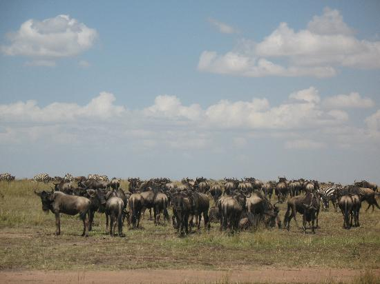 Wildlife Kenya Safaris - Day Trips: Masai Mara