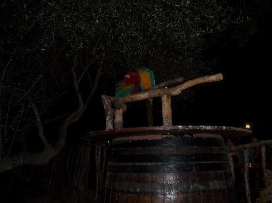 Son Serra de Marina, Spanien: the parrots