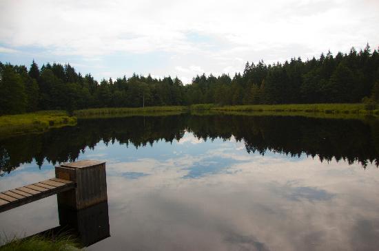 Landgasthof Haflingerhof: Gita in carrozzella