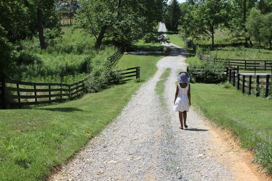 Smithfield Farm Bed and Breakfast: The long and beautiful driveway to the main house