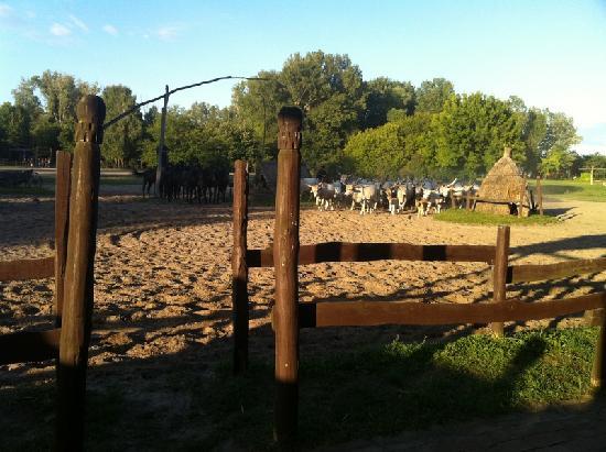 Varga Tanya Horse Show: horse show
