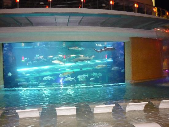 Golden Nugget Hotel: pool & aquarium