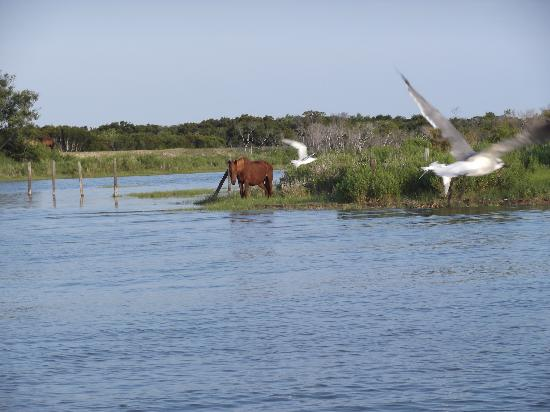 Chincoteague Cruises & Nature Tours: LOVE  IT