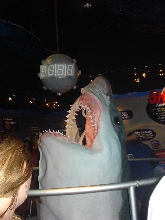 Ripleys Aquarium Great White Head In Shark Exhibit Myrtle Beach