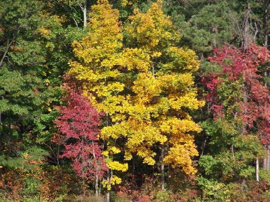 Shawnee State Park: Beautiful trees by Turkey Creek