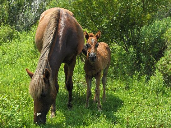 Back Country Safari Tours: new born, 5 days old
