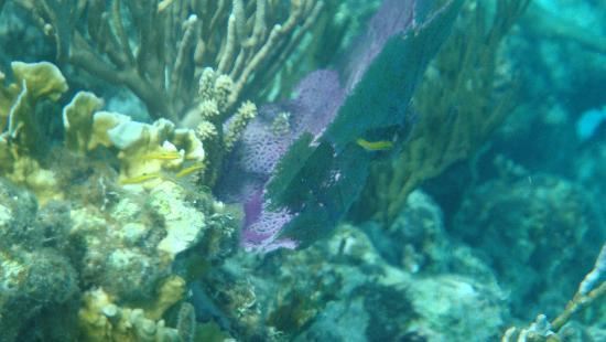 Stuart Cove's Dive Bahamas: beautiful coral