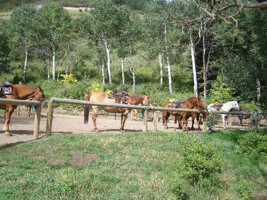 Bearcat Stables: some of the horses
