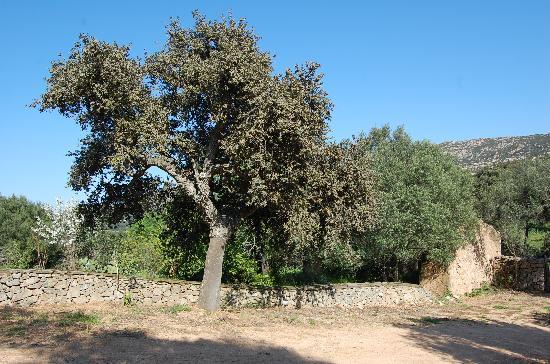 B&B The Old Farm Asfodeli: tree cork