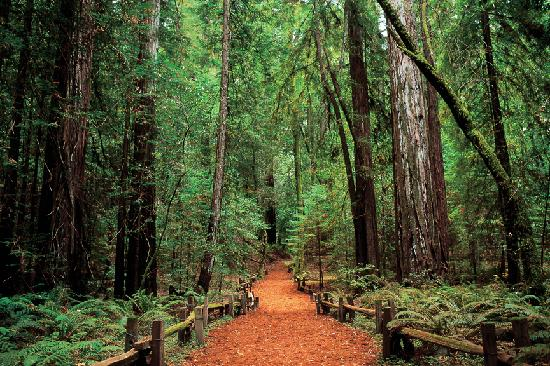 Applewood Inn: An Ancient Redwood Forest Near Us