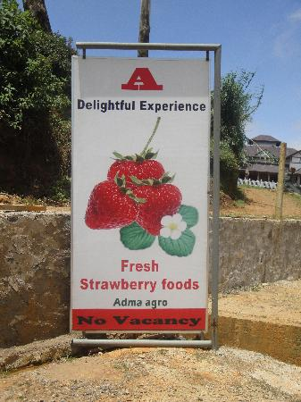 Adma Agro fresh strawberry foods, Nuwara Eliya, Sri Lanka