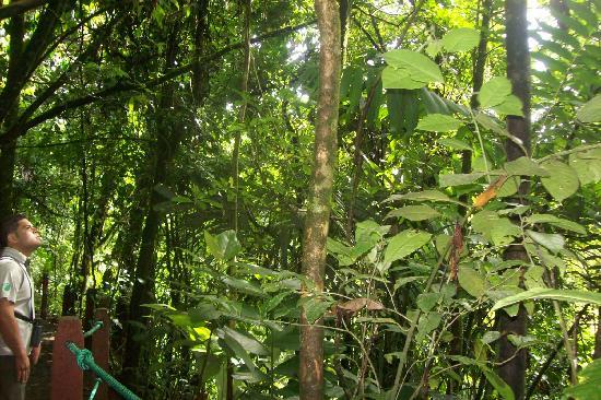 San Carlos, Kostaryka: vista de la selva