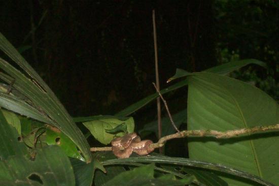 San Carlos, Costa Rica: vivora vista en el paseo