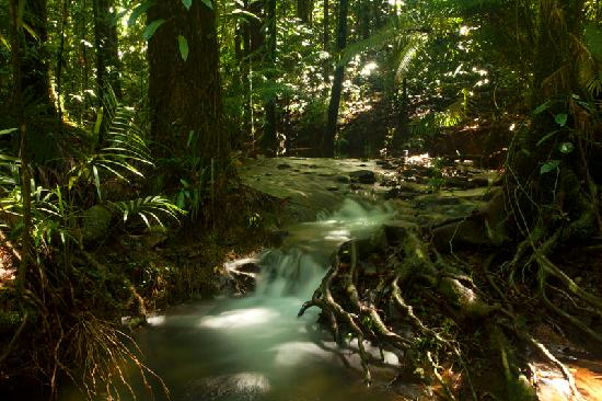 ‪‪Daintree Rainforest - Cooper Creek Wilderness‬: Kuranji Creek, Daintree Rainforest‬