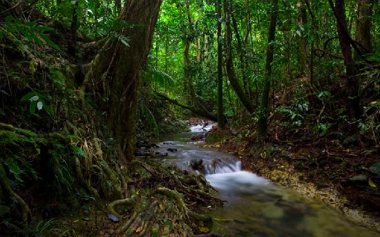 ‪‪Daintree Rainforest - Cooper Creek Wilderness‬: Well-watered Creek, Daintree Rainforest‬